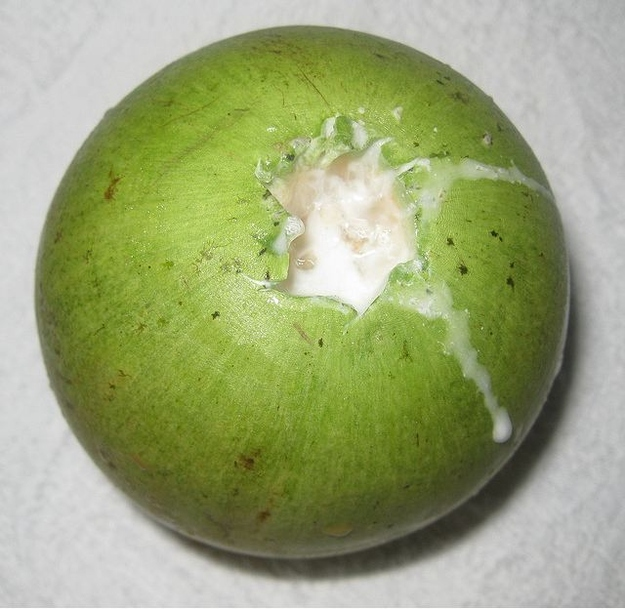 Star Apple, sometimes known as Breast Milk Fruit